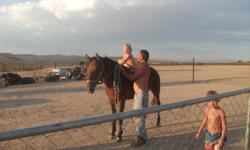 Broke nice and loving Mustang good with kids loads easy well behaved. You pick up . National Trails hwy. Between Barstow and Victorville. Seaira