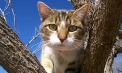 2 1/2 years old and VERY friendly. She LOVES to play. Great with children of all ages. I am very sad to let her go.