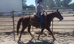 Cat N Conejo is a 14 hand 2006 mare by Catalano out of Dual N Montana. I have owned Conejo since she was three. She is a sweet sorrel mare who was started as a cutter and has worked cows extensively. She is extremely athletic and works cows like a pro. I
