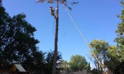 NO TREE TO BIG OR SMALL. . . WE DO THEM ALL! FREE ESTIMATES. . .  GET A GOOD DEAL WITHOUT TAKING AWAY FROM THE QUALITY OF A SERVICE. HARDIN QUALITY TREE SERVICES PROVIDED: TREE REMOVAL. . . SPECIALIZING IN DANGEROUS TREE REMOVAL! TREE TRIMMING STUMP